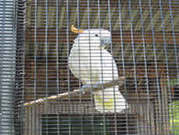 The Most Popular Birdcage-Welded Bird Cage